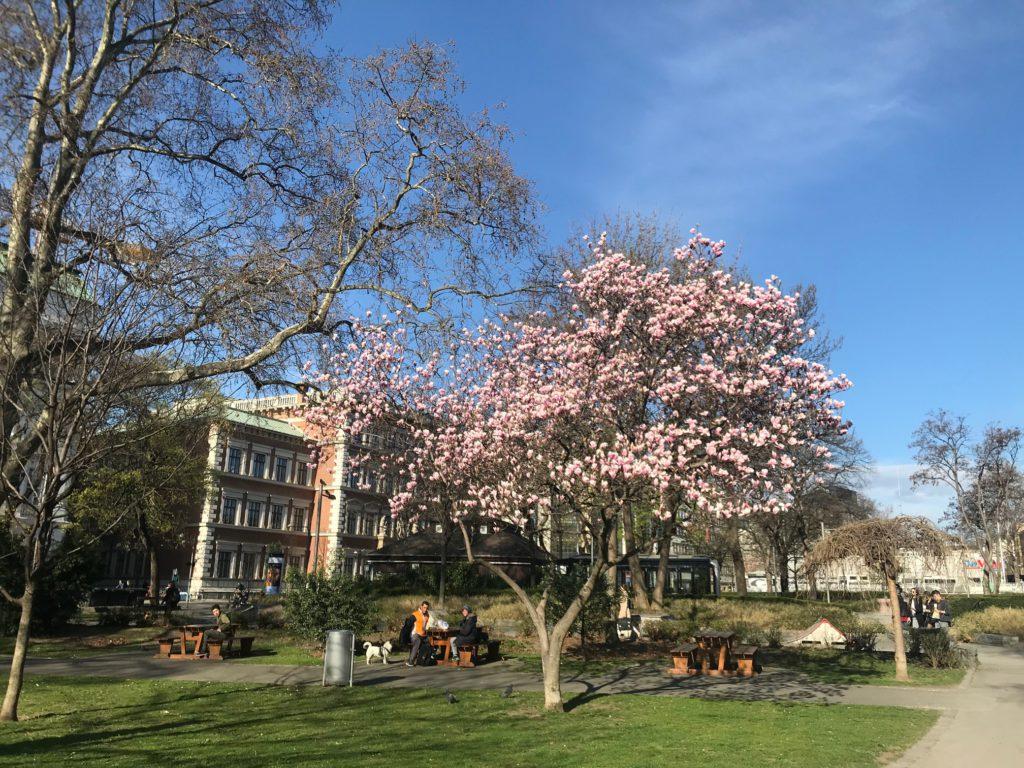 foto frühling im resselpark mit blühendem magnolienbaum